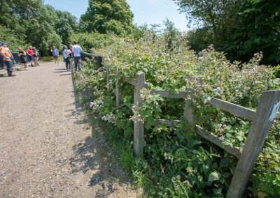 Hedgerow at Waltham Abbey